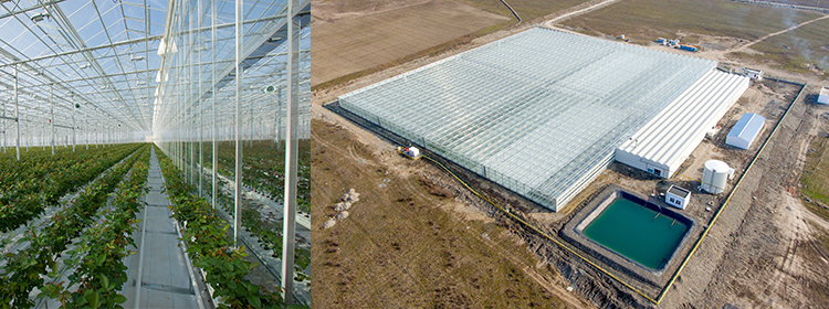 Werken op nieuw rozenbedrijf in Azerbeidzjan